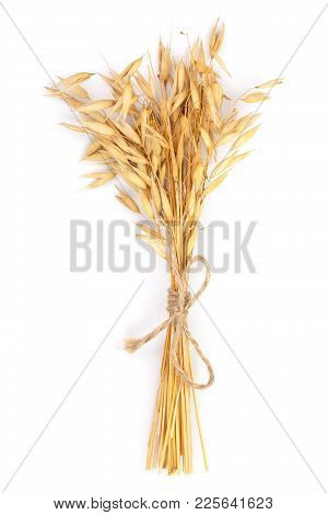 Bunch Of Oat Spike Isolated On White Background. Top View. Flat Lay.