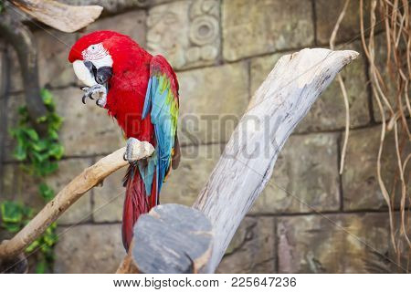 Red And Blue Parrot Macaw On Branch Of Old Tree. Ara Ararauna, Macaw Parrot