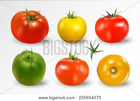 Realistic Vector Of 6 Different Colors Of Tomatoes On Transparent Background. Red, Green, Yellow And