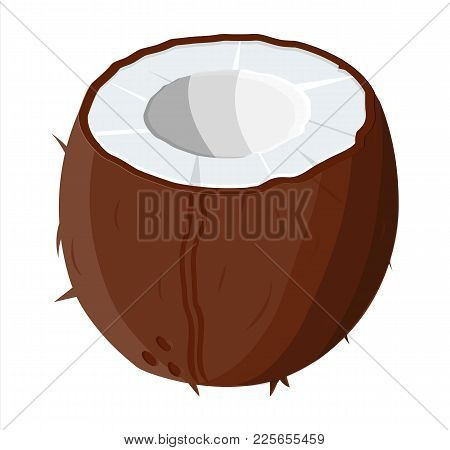 Ripe Coconuts And Half Coconut On White. Coconut Drupe With Half Section. Vector Illustration In Fla