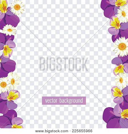 Floral Borders On Transparent Background. Vector Illustration. Pansies And Camomiles For Your Spring