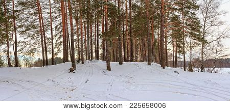 Panorama Of Winter Coniferous Forest. A Beautiful Winter Landscape. Snow-covered Trees After Snowsto