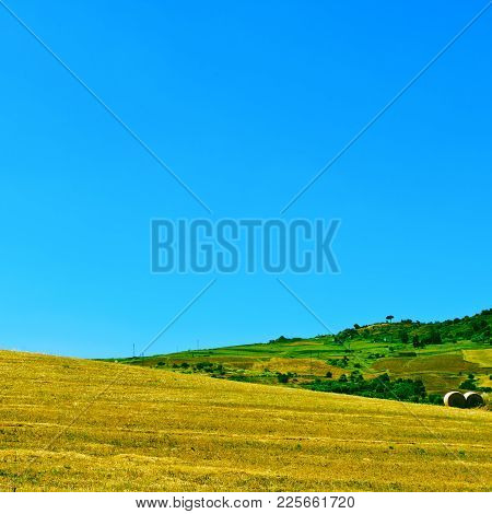 Harvested Wheat Field And Olive Groves On The Hills In Sicily