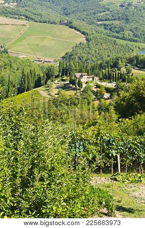 Tuscan Landscape With Vineyards. Italian Medieval Homesteads  And Countryside Landscape With Grape F
