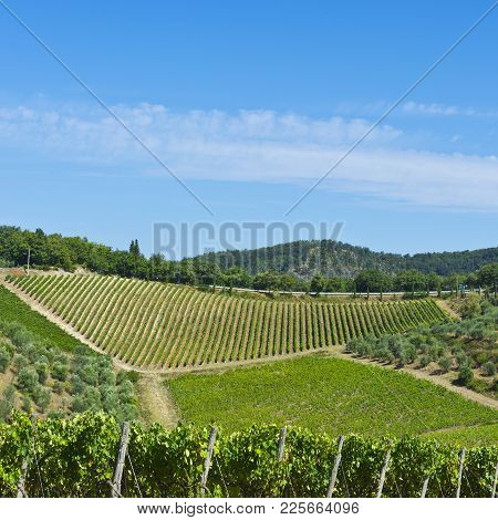 Tuscany Landscape With Country House, Olive Groves And Vineyards. Italian Wine Farm Surrounded With