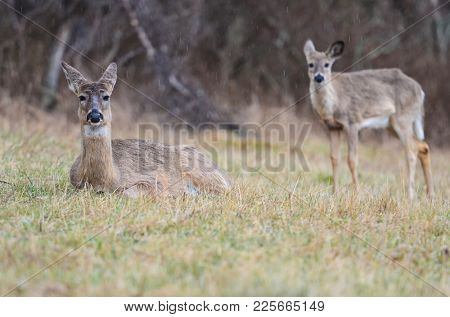 Deer family in autumn forest