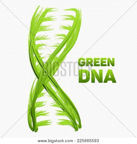 Vector Abstract Dna Strand As Green Grass. Conceptual Health And Ecology Medical Illustration. Doubl