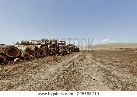 Logging On The Plowed Fields In Italy. Firewood On The Stubble Fields Of Tuscany After Harvest. Vint