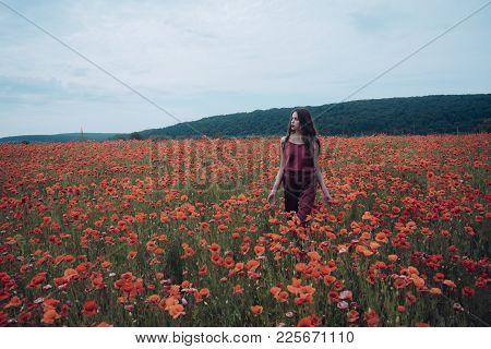 Beauty, Summer, Spring, Poppy Seed. Woman In Poppy Flower Field, Harvest. Opium Poppy, Botanical Pla