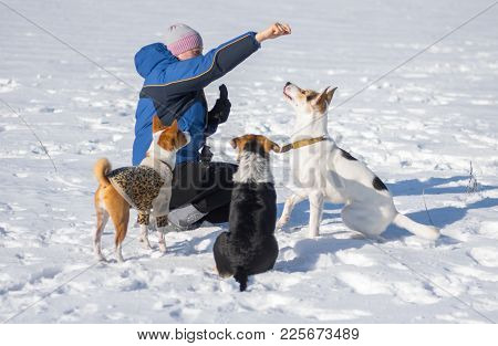 Woman Feeding Dogs While Training Some Simple Commands Playing Outdoor At Winter Season