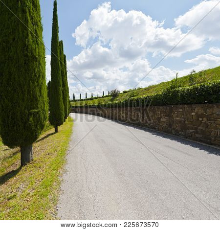 Asphalt Road Between Italian Wine Farms Surrounded With Vineyards. Cypress Alley On The Background O