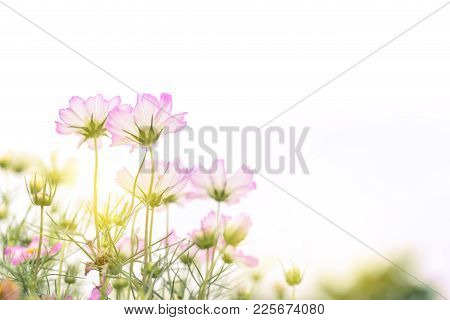 Close Up Natural Flowers Background.  Amazing View Of Colorful  Flowering In The Garden And Green Gr