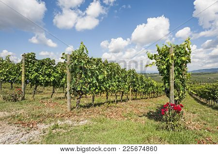 Italian Wine Farm Surrounded With Vineyards And Olive Trees.