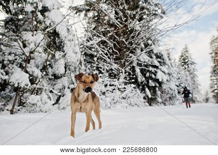 Abandoned Dog On Winter Road Of Forest.