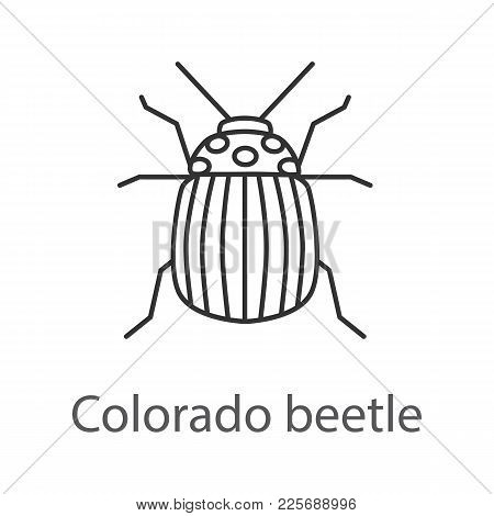 Colorado Beetle Linear Icon. Potato Bug. Thin Line Illustration. Contour Symbol. Vector Isolated Out