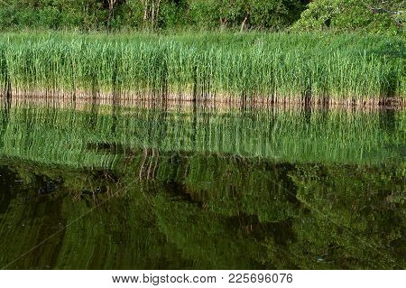 Marshland, Reflection Of Trees In The Pond, A Picturesque Pond In The Forest