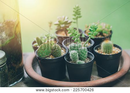 Cactus Green Plant Botany Home Decoration Corner.