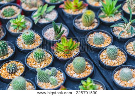 Cactus Radiation Absorb Plant Or Diy Home Decoration Garden Eco Small World In Pot Concept