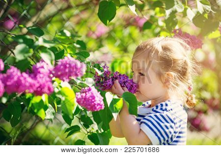 Little Child Smelling Lilac Flowers In Beautiful Spring Day. Cute Girl Outdoors In The Garden. Kid I