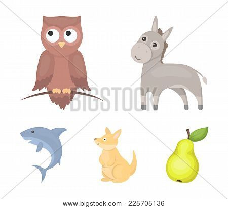 Donkey, Owl, Kangaroo, Shark.animal Set Collection Icons In Cartoon Style Vector Symbol Stock Illust