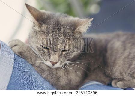 Cat In Woman's Lap