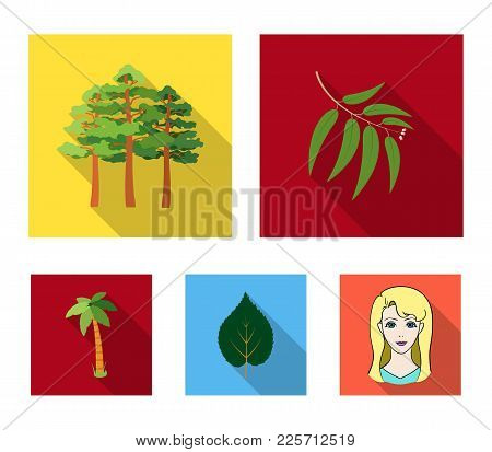 Branch Zucalyptus, Pine, Leaf, Palm.forest Set Collection Icons In Flat Style Vector Symbol Stock Il