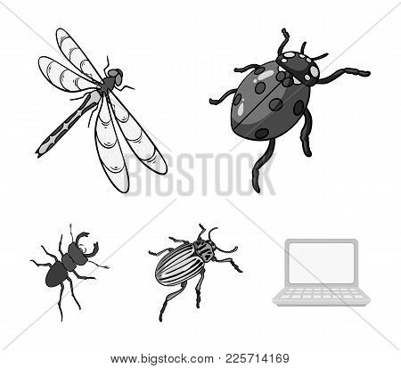 Arthropods Insect Ladybird, Dragonfly, Beetle, Colorado Beetle Insects Set Collection Icons In Monoc