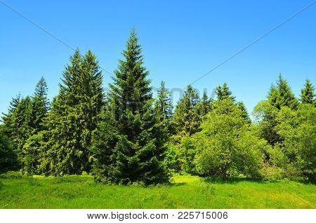Summer landscape in National park Bayerische Wald, Germany.