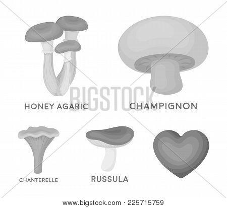 Champignon, Honey, Agarics, Russula, Chanterelle. Set Collection Icons In Monochrome Style Vector Sy