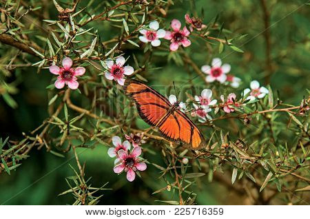 Close-up Of A Colorful Butterfly On Top Of Flowers In Horto Florestal, Near Campos De Jordao, A Town