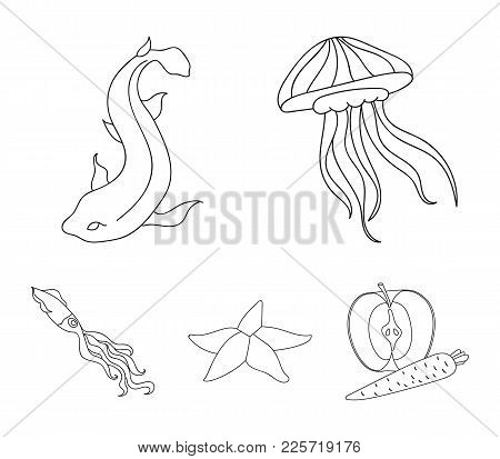 Jellyfish, Squid And Other Species.sea Animals Set Collection Icons In Outline Style Vector Symbol S