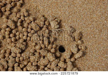 Sand Crab Hole On Beach At Fraser Island