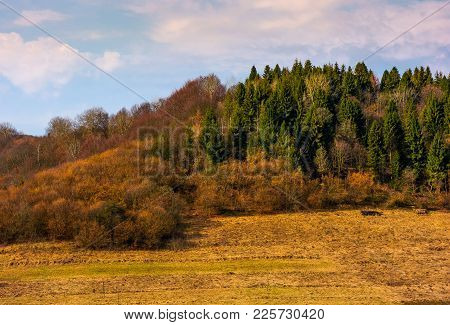 Forested Hill In Springtime. Lovely Countryside Scenery With Weathered Grass On A Slope