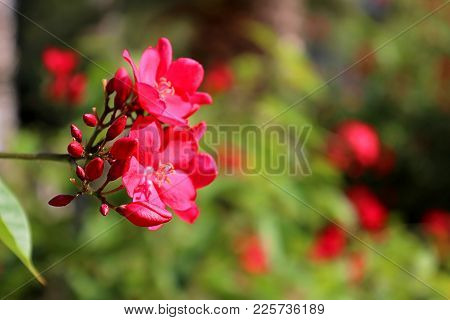 Red Flowers In The Park Near Sarona Matket In Tel Aviv Israel In The Autumn