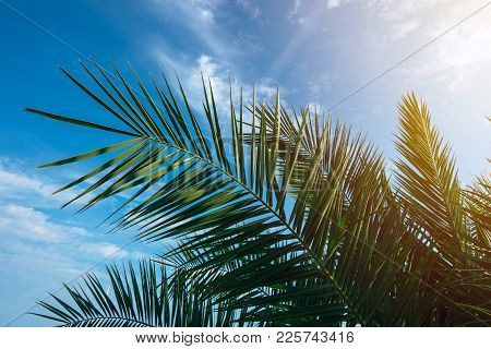 Green Palm Tree Leaves Against Blue Summer Sky, Selective Focus