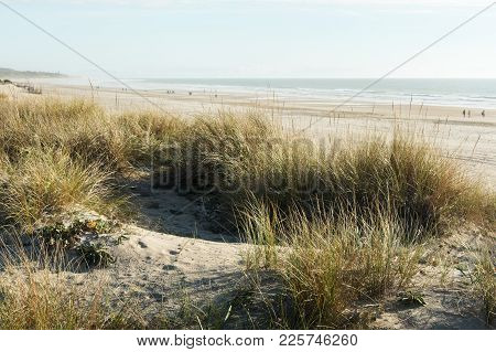 People Walking Through A Wild Beach Of Cadiz With Fog, With Dunes And Bushes In The Foreground And A