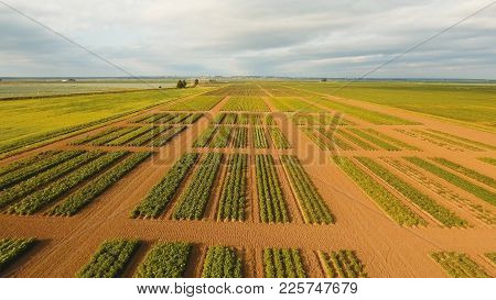 Aerial View Of Agricultural, Cultivated Fields. Agricultural Landscape.irrigated Farmland