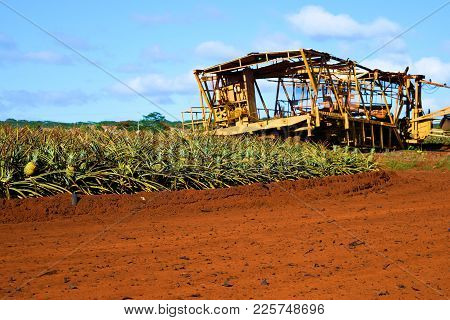 January 29, 2018 At Dole Plantation In Oahu Hawaii:  Vintage Farming Equipment Surrounded By Pineapp