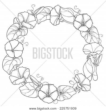 Vector Round Wreath With Outline Ipomoea Or Morning Glory Flower, Leaf And Bud In Black Isolated On