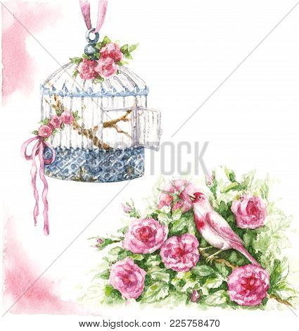 Watercolor Painting.  Hand Drawn Pink Canary Sitting In Rose Bush And Hanging Birdcage Isolated On W