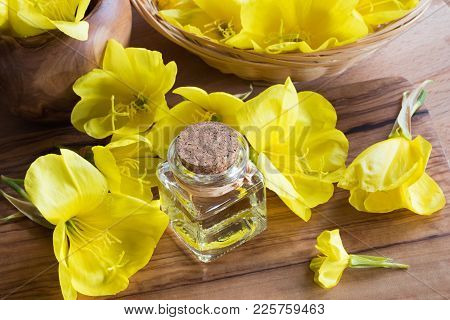 A Bottle Of Evening Primrose Oil With Fresh Evening Primrose Flowers On A Wooden Table