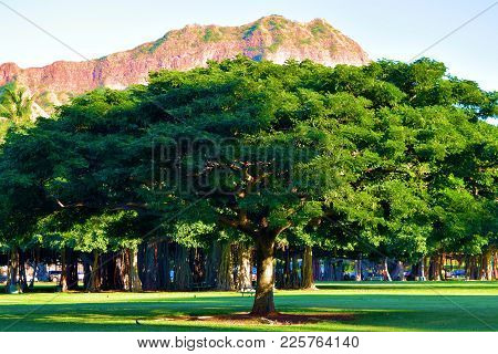 Diamond Head Mountain Which Is A Volcanic Cinder Cone Taken From Kapiolani Park With Banyan Trees In