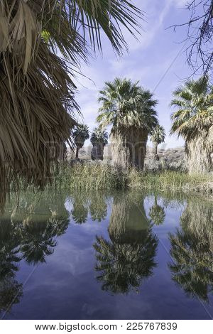 Thousand Palms, California - December 11, 2017: The Mccallum Grove Pond Is An Oasis On A Desert Trai