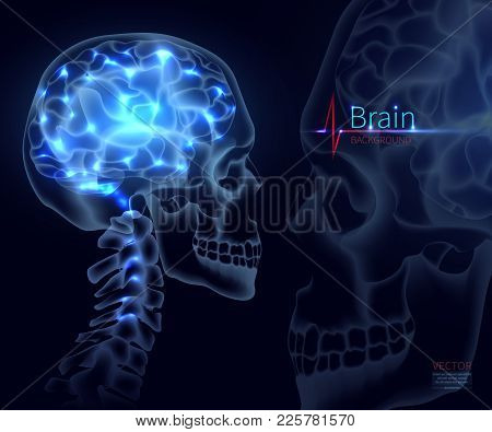 Brain, Vector Illustration For Medicine. A Skull Shot, Neural Networks Of The Brain, Brain Activity