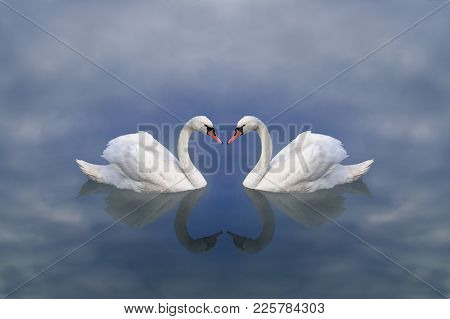 Swan Love. Love Of Swans. A Pair Of White Swans In A Fairy, Heavenly Cloudy Lake, Tenderly Demonstra