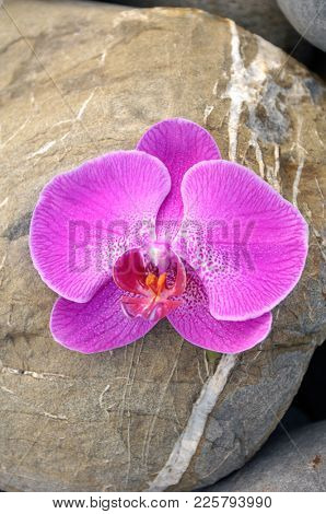 Close up Pink orchid on stone texture