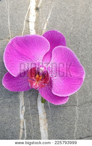 Pink orchid on gray stone texture