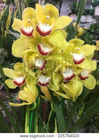 fresh beautiful yellow orchid in nature