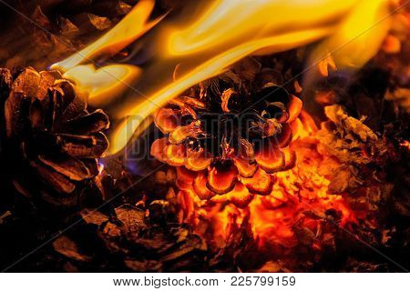 Beautiful Campfire Of Pine Cones At Night In The Forest. Siberia. Taiga