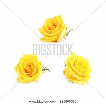 Yellow Rose Bud Isolated Over The White Background , Set Of Several Different Foreshortenings